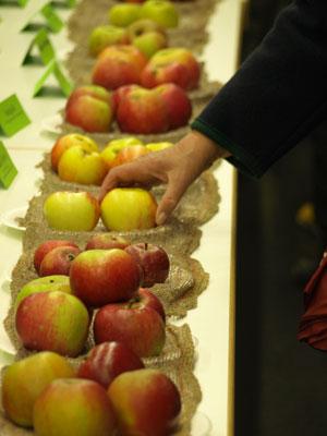Apfelsortenausstellung beim  Apfelfest