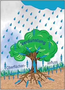 Obstbäume verhindern Erosion