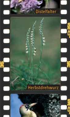 Flora und Fauna in der Streuobstwiese