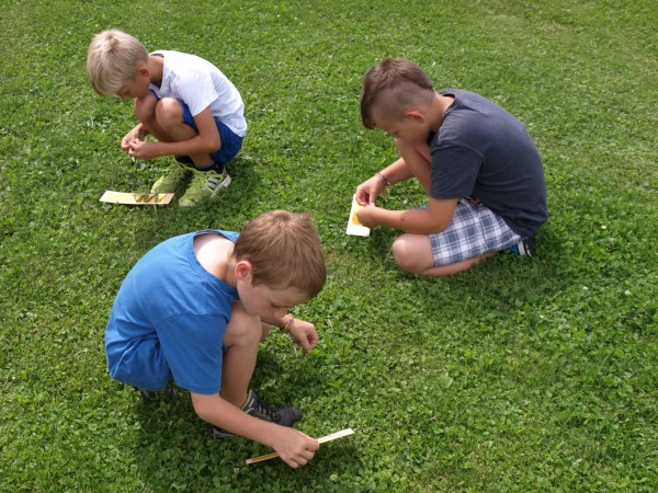 Naturnamen kleben: Konzentrierte Jungs bei der Arbeit
