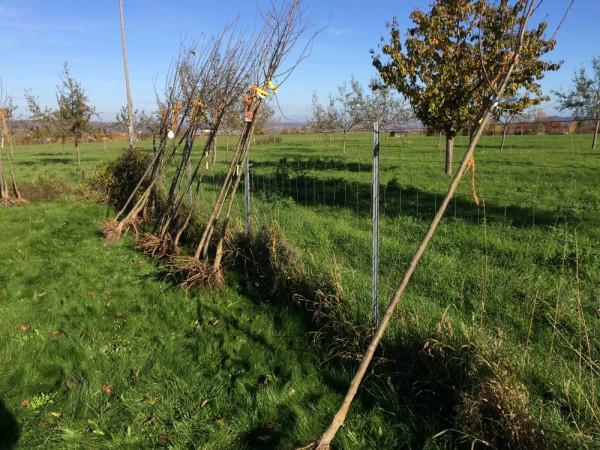 Über 80 Baum-Päckchen (hier ein kleiner Auschnitt) warten auf die Abholung.