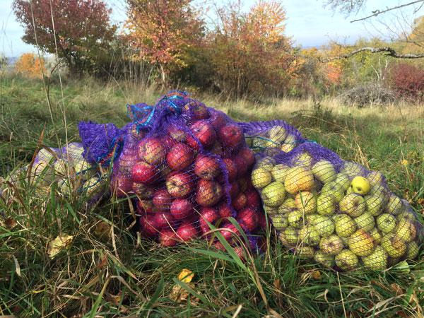 Äpfel in Säcken