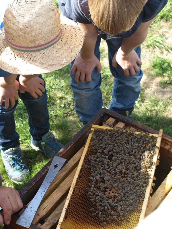 Siehst du die Biene mit dem roten Nummernschild? Das ist die Königin!