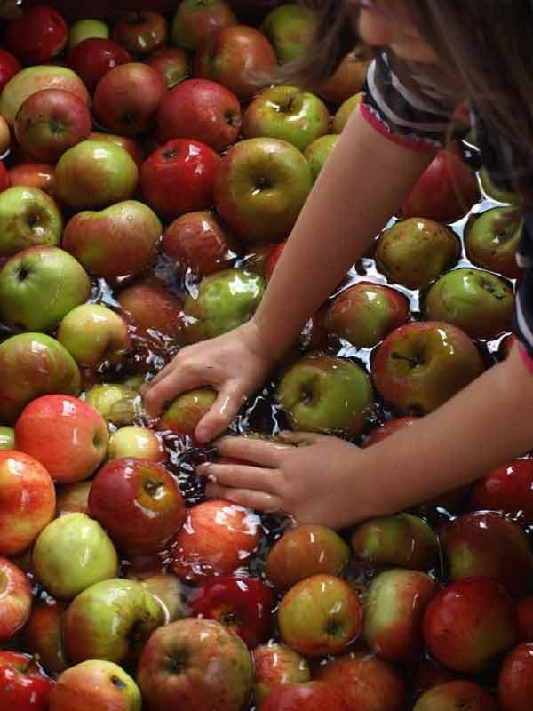 Dann werden Äpfel gesammelt und gewaschen, ...