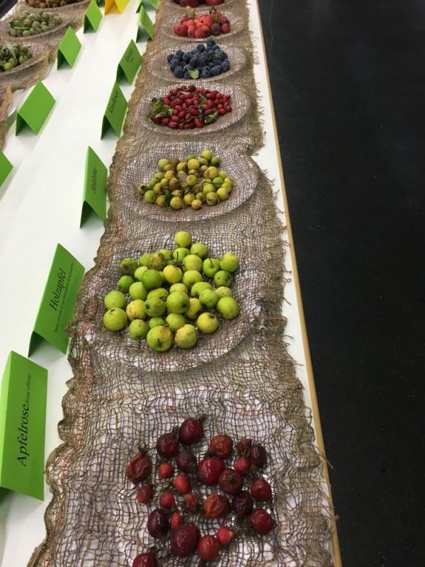 Die Obstsortenausstellung der Obst- und Gartenbauvereine Mössingen und Belsen