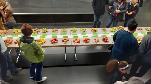 Weniger Äpfel? Dafür gab's mehr Birnen bei der Sortenausstellung der Mössinger OGVs.