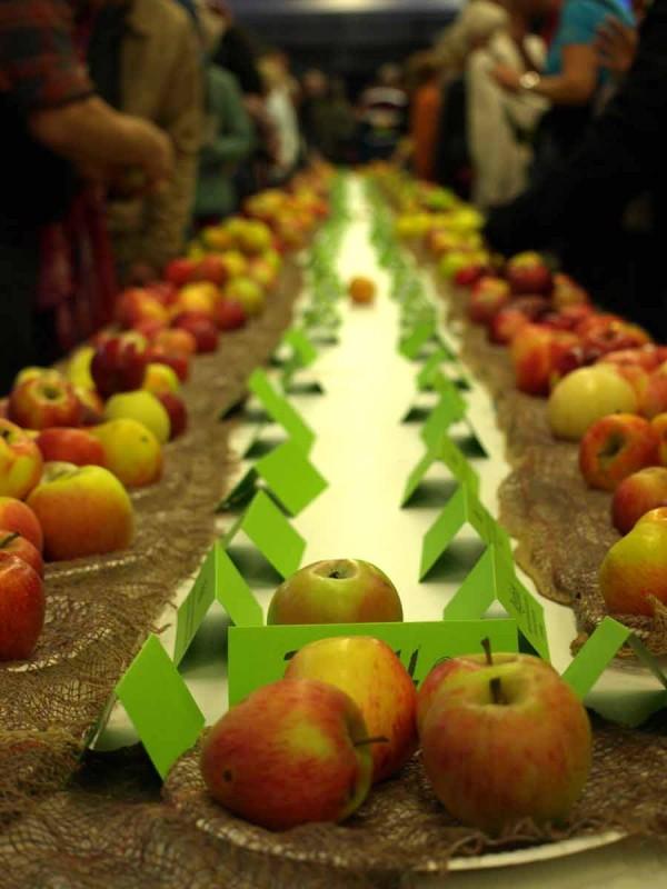 Unablässig umrundet: Apfelsortenausstellung der Obst- und Gartenbauvereine Mössingen und Belsen. Dieses Jahr noch eine Woche länger zu bestaunen in der Stadtbücherei Mössingen.