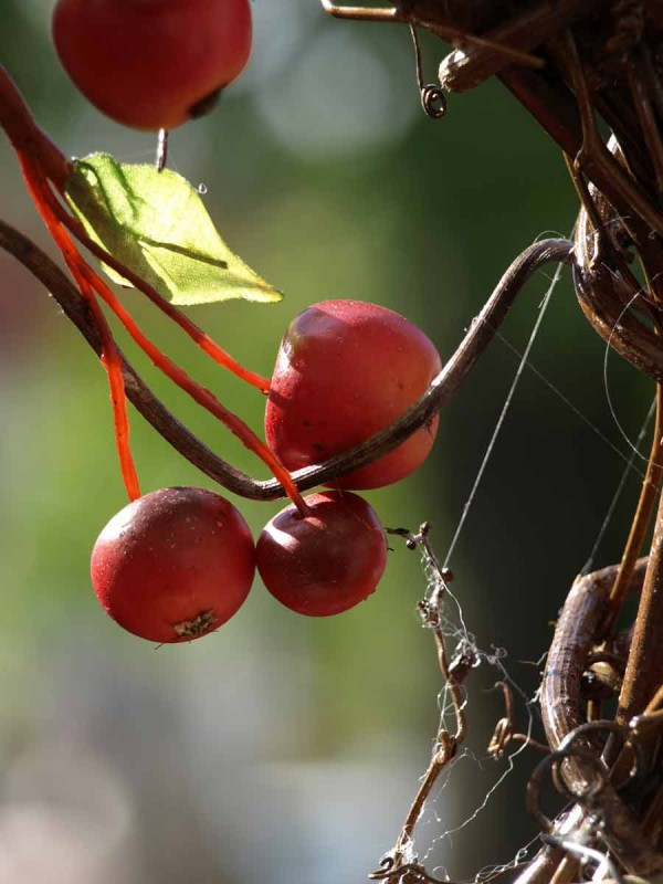 Immer wieder: Äpfel in allen Arten, Farben, Größen und Formen.