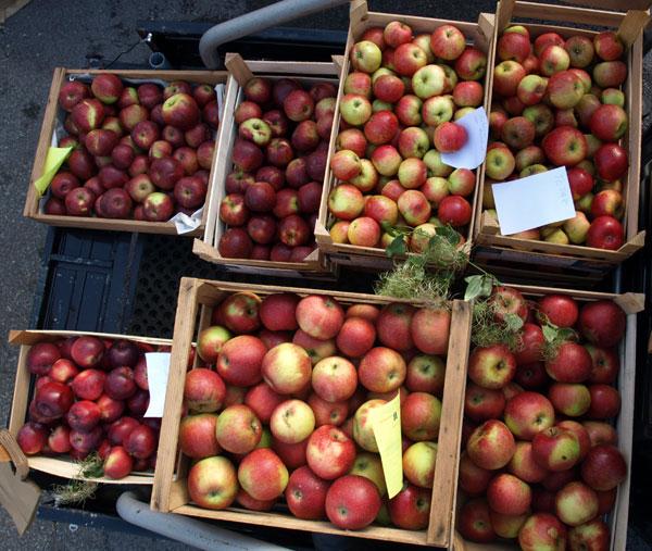 Äpfel in Kisten