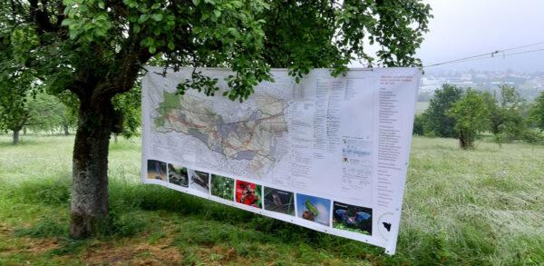 Große Karte der Endelbergtrasse an Baum aufgehängt