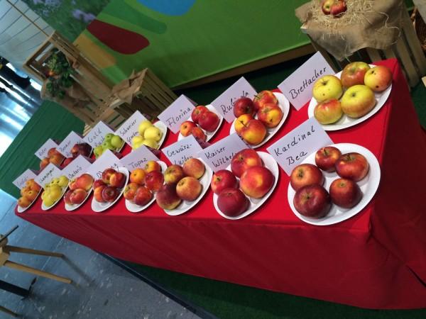 Von Kaiser Wilhelm bis Berner Rosenapfel - alte und neue Apfelsorten aus dem Lehrgarten des OGV Mössingen auf der CMT 2015