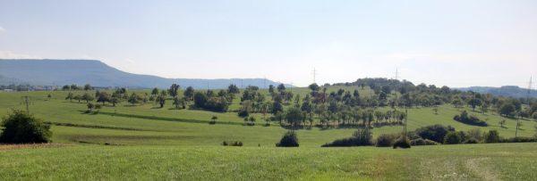Der Endelberg, von Nehren aus gesehen. Durch diese Streuobstwiesen wird ein 12 Meter tiefer Einschnitt führen.