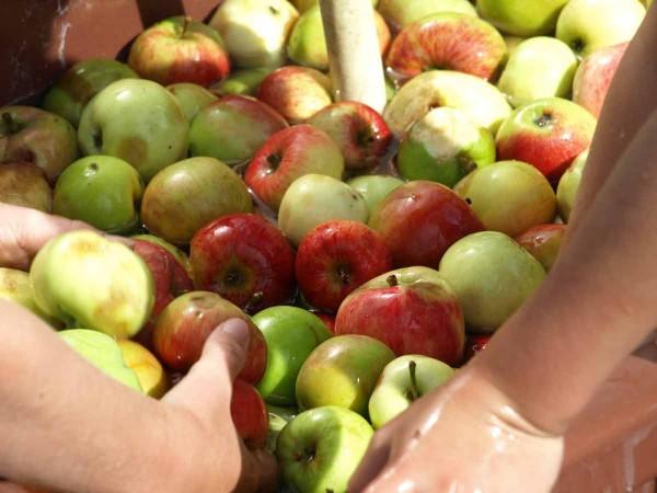Die Äpfel müssen sauber sein.