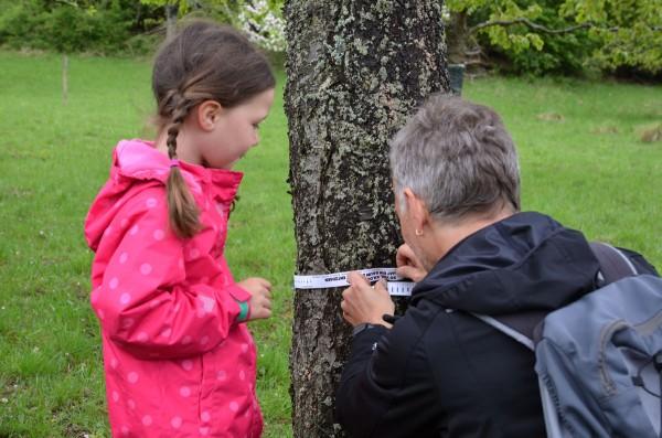 Wieviel CO2 bindet ein Obstbaum? Mit diesem Maßband lässt sich das messen.