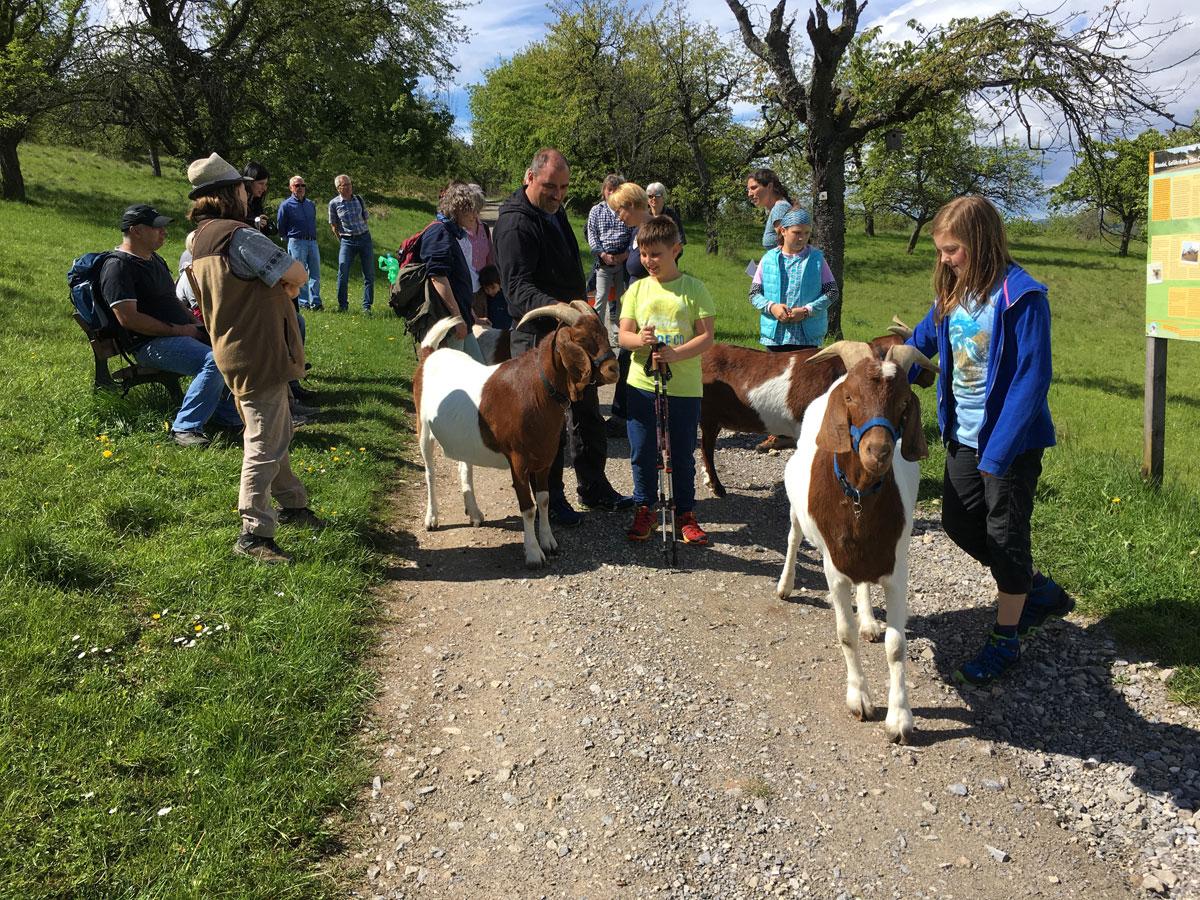 Ziegen ziehen bei Kindern