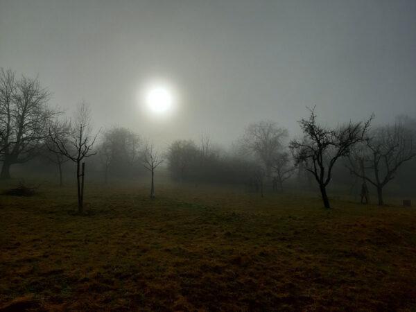 Streuobstbäume im Nebel