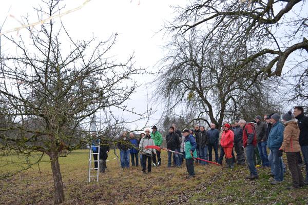 Mit der Stangensäge geht Hans Wener dem Problembaum an den Kragen (Bild: Hermann Haas)